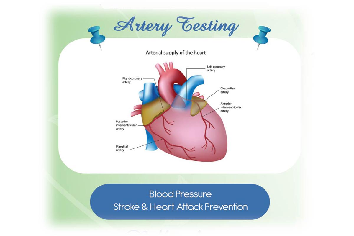 Artery Testing